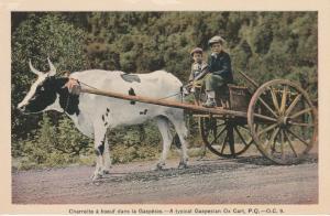 Boys on Typical Gaspesian Ox Cart - Gaspe QC, Quebec, Canada - WB