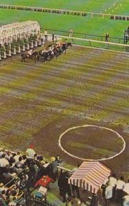 New York Saratoga Springs Saratoga Race Track Start Of A Race Horse Racing
