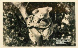 Australia Koala Native Bear in park 1930s RPPC Photo Postcard  20-7922