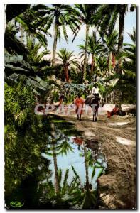 Old Postcard The African Oasis In I Donkey Donkey