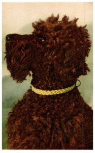 Dog , Poodle , Alfred Mainzer