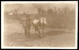 Team of Horses in Harness Real Photo postcard unused c1920