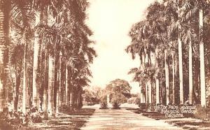 Calcutta India Palm Avenue, Botanical Gardens Calcutta Palm Avenue, Botanical...