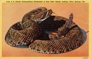 FL - Silver Springs, Ross Allen Reptile Institute.Diamond-Back Rattlesnake