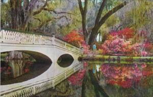 South Carolina Charleston Magnolia Gardens Beautiful Azaleas and Rustic Bridge