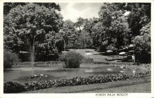indonesia, JAVA BOGOR, Kebun Raya Bogor, Botanical Garden (1950s) RPPC (3)