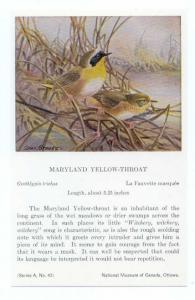 Maryland Yellow-Throat painted Allan Brooks, National Museum of Canada, Ottawa