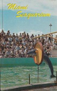 Miami , Florida , 1950-60s ; Dolphins , Seaquarium