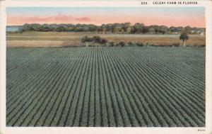 Florida Typical Celery Farm Curteich