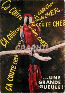 Postcard Modern humorous Pet macaw (america) Parrot