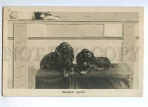 187608 ART NOUVEAU Blenheim Spaniel Vintage PHOTO PC
