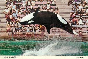 Shamu Killer Whale at Sea World Back Flip Postcard