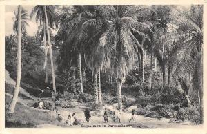 German East Africa Oelpalmen in Daressalam, Tanzania Dar es Salaam, Palm Trees