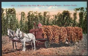 A California Hop Field Road of a Thousand Wonders SOUTHERN PACIFIC Divided Back