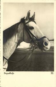 Horse Postcard (1930s) RPPC