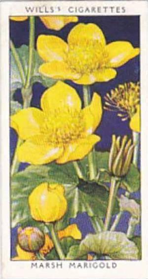 Wills Vintage Cigarette Card Wild Flowers 1936 1st Series No 22 Marsh Marigold