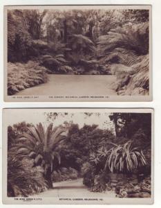 P97 JL old RPPC postcard fernery botanical gardens melbourne