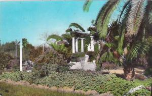 Algeria Boufarik Le Jardin Public Real Photo