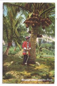 Florida Coconut Trees Man Costume 1910 Cocoanut Postcard