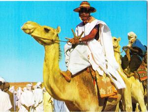 Algeria, Man riding Camel, unused Postcard