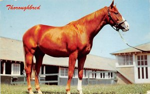 Thoroughbred Horse 1963 paper wear on edges