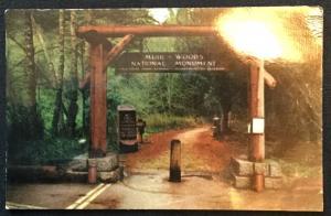 Unused Postcard Muir Woods Nat'l Monument California LB