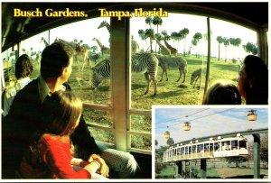 Florida Tampa Busch Gardens The Dark Continent Monorail Safari Giraffes and Z...