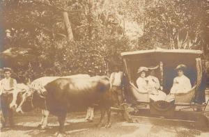 Madeira Portugal Women In Ox Cart Real Photo Antique Postcard K40044