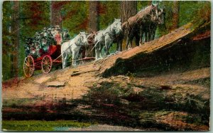 1919 YOSEMITE National Park Postcard Stage Coach Fallen Monarch Mariposa Grove