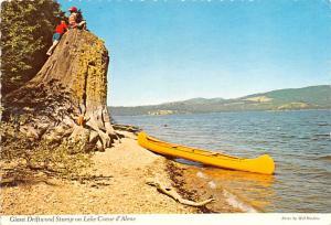 Giant Driftwood Stump - Lake Coeur d'Alene