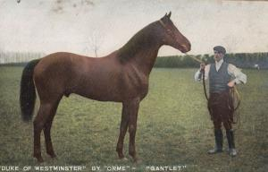 Duke Of Westminster By Race Racing Horse Orme Gauntlet Antique Royalty Postcard