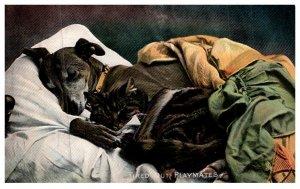 Dog , Sleeping with Cat