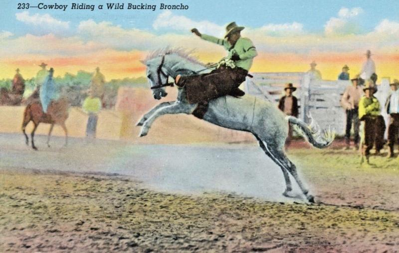 Cowboy Riding Wild Bucking Broncho Rodeo Horse Bronco Linen Postcard D25