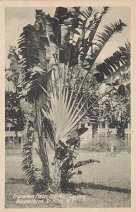 St Kitts ,00-10s ; Travelers Palm , Pall Mall Square , Basseterre