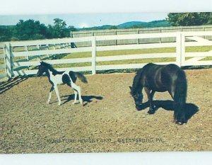 Pre-1980 MINIATURE HORSE FARM Gettysburg Pennsylvania PA AD2318