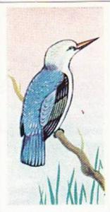Sweetule Products Vintage Cigarette Card Tropical Birds 1954 No 24 Angola Kin...