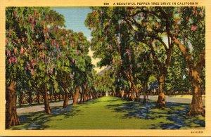 California A Beautiful Pepper Tree Drive Curteich
