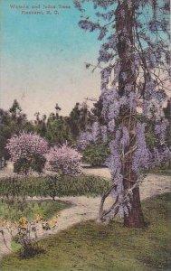 North Carolina Pinehurst Wisferia And Judas Trees  Albertype