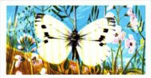 Brooke Bond Tea British Butterflies No 42 Green-Veined White