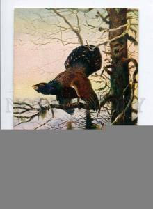 257458 HUNT Bird Capercaillie on Tree Vintage N.K.G. postcard