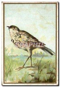 Chromo Bird