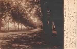 Wayne Michigan~Tree-Lined Monroe Avenue~Sepia Real Photo Postcard~RPPC 1906 UDB