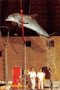 Netherlands Dolfinarium V.T.B Boulevard Harderwijk Dolphin Jumping