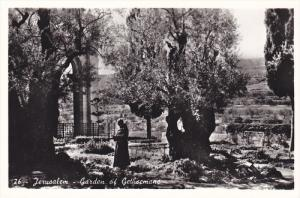 RP: JERUSALEM - Garden of Gethsemane , 30-50s