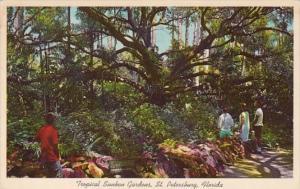 Florida St Petersburg 200 Year Old Live Oak At Sunken Gardens 1964