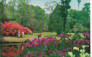 South Carolina Charleston Magnolia Gardens Beautiful Azaleas