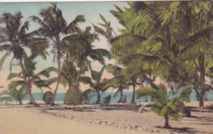 Florida Fort Myers Palm Trees Along Beach Looking Toward Gulf Of Mexico From ...