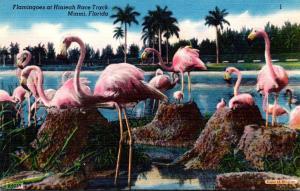 Birds Flamingos At Hialeah Race Track Miami Florida