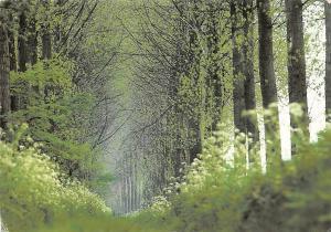 Netherlands Martin Kers 1998 / Zeeland nature forest landscape