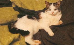 Kat, Cat Een rustende kat is het zinnebeeld van een absolute kalmte